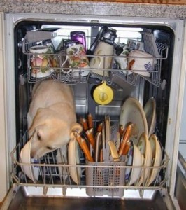 dog-in-dishwasher-266x300