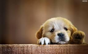 Sad-Puppy-001